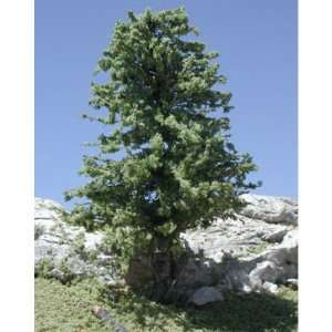 Deciduous Trees w/Real Wood Spring Green 2 4 (3) TLS204