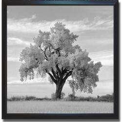 Jean Miele Oak Tree Framed Canvas Art