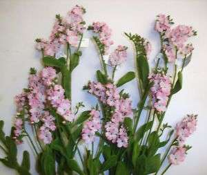 12 Stems Forget Me Nots Pink Artifical Silk Flowers