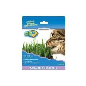 Best Quality Cosmic Kitty Cat Grass / Size By Ourpets