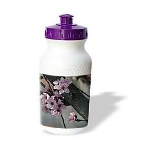 Patricia Sanders Flowers   Cherry Blossom Tree  Pink