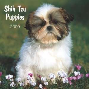 Shih Tzu Puppies 2009 Small Wall Calendar: Office Products