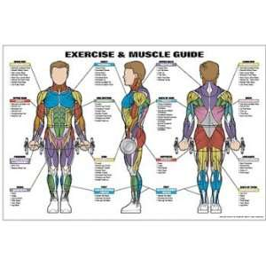 and Male Muscle Guide Laminated Fitness Poster Health & Personal Care